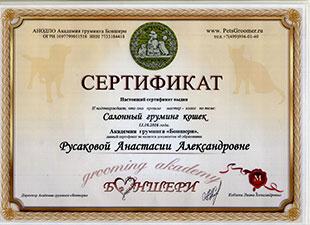 сертификат салонный груминг кошек
