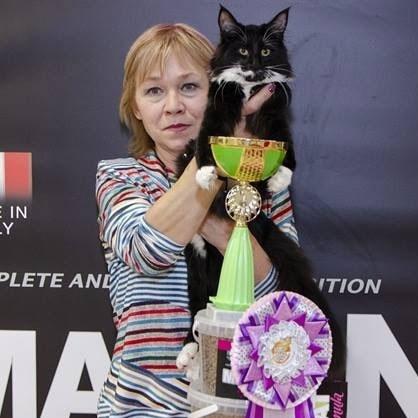отзывы о выставочном груминге кошек