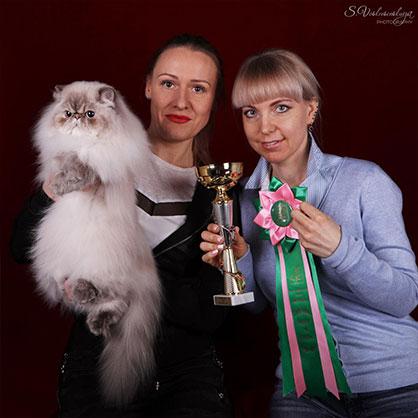 кошки победители выставок