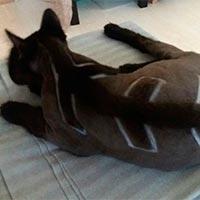 красивые стрижки кошек