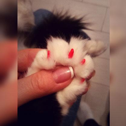 красные колпачки у кошки