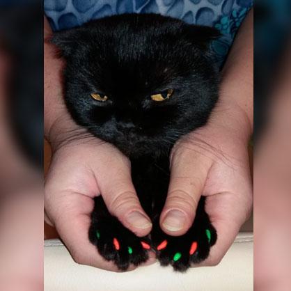 разноцветные колпачки на когти у кошки