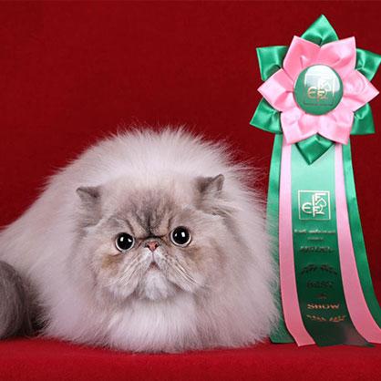 система FiFe кошки