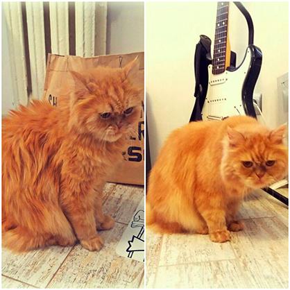 свалявшаяся шерсть у кота